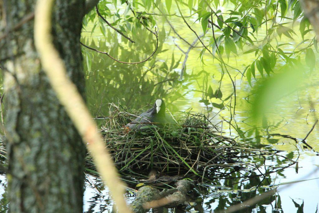ptačí hnízdo