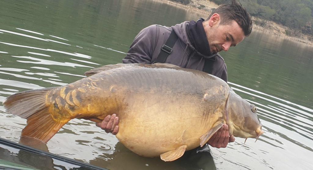 Kapr 38 kg