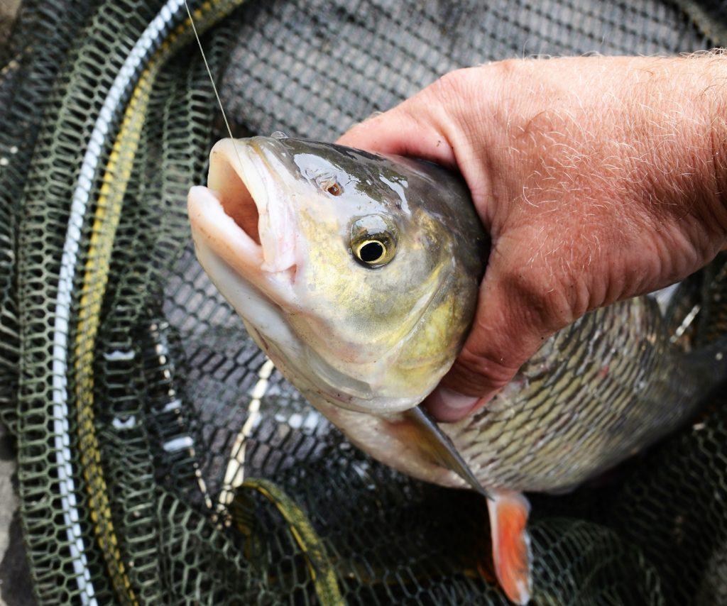 ryba na háčku