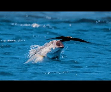 ryba loví ptáka