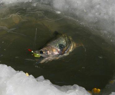 zimní rybaření