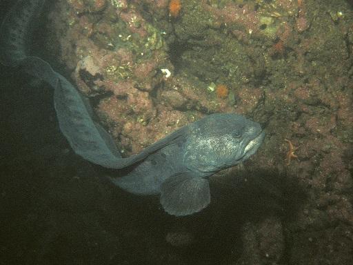 podivuhodná ryba
