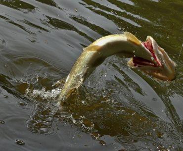 krása rybaření