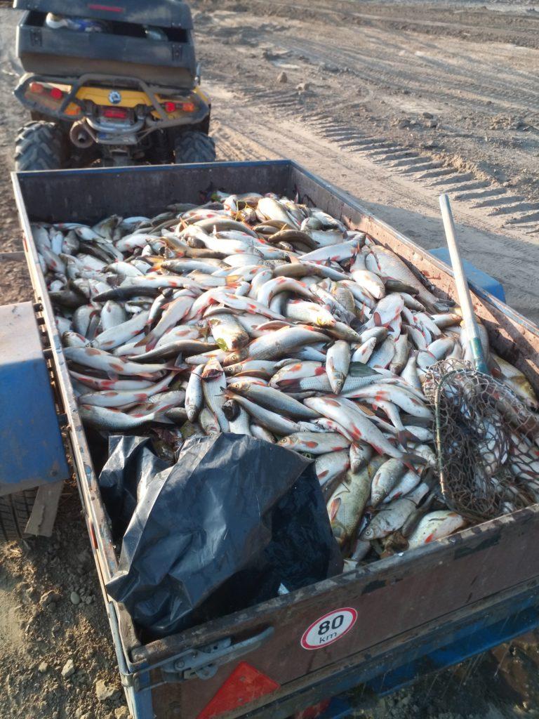 ryby na valníku