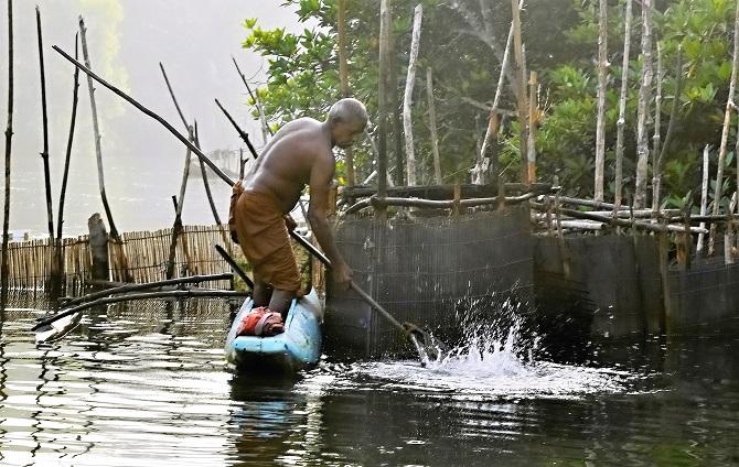 domorodý rybář