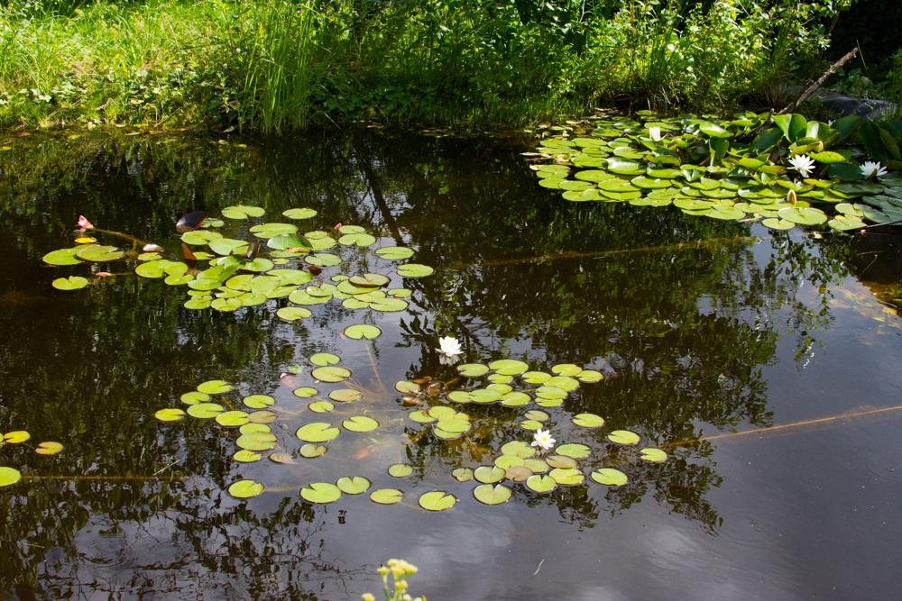 foliový rybník