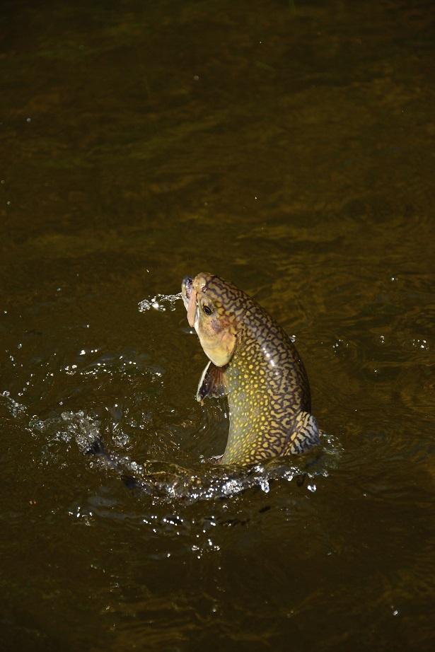 ryba loví