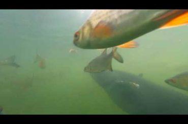 hejno ryb