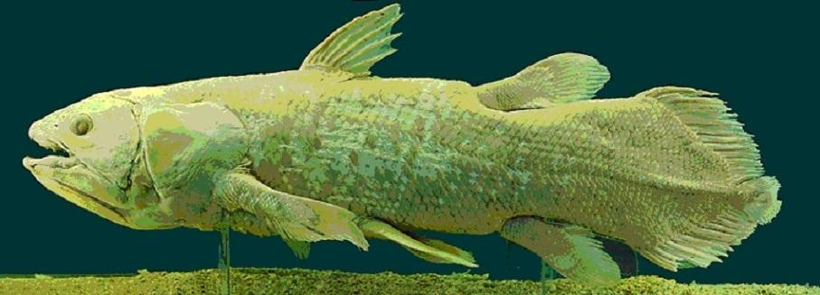 vyhynulá ryba latimérie