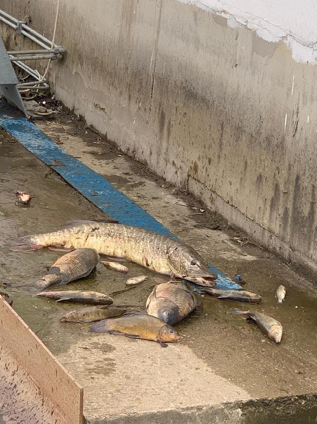 úhyn ryb Bílina