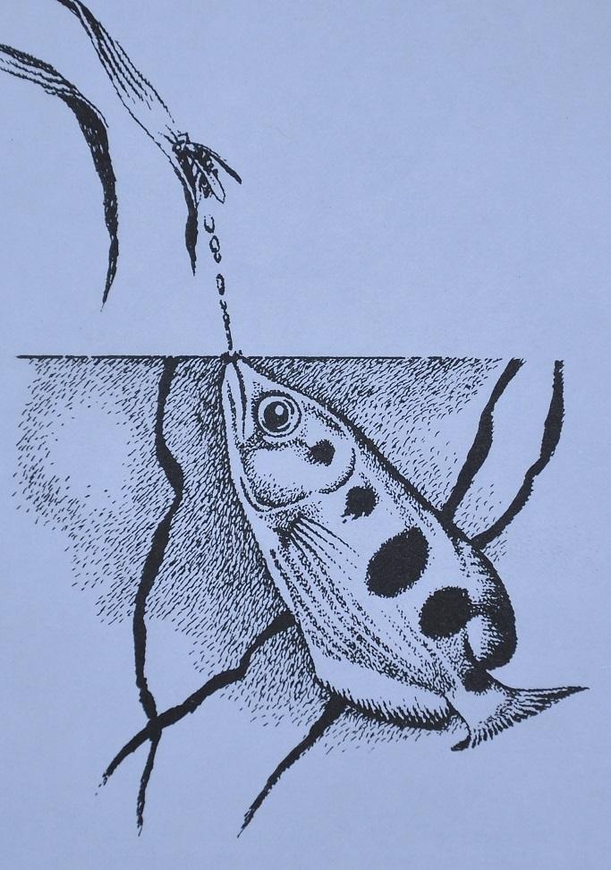 rybí střelec