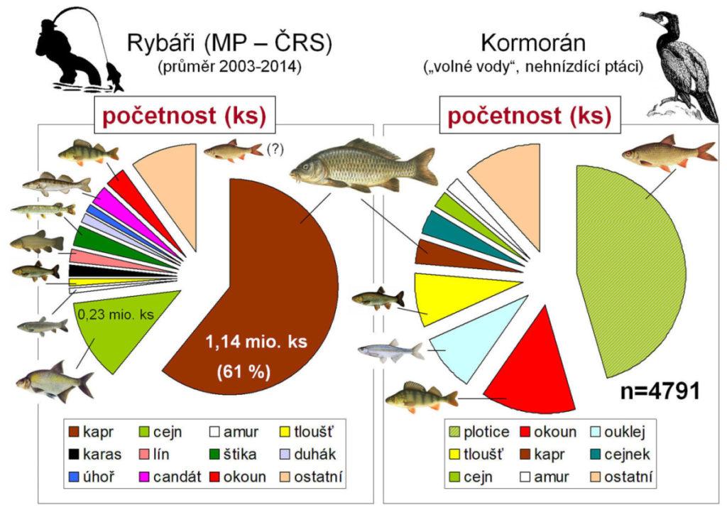 srovnání úlovků rybáře a kormorána