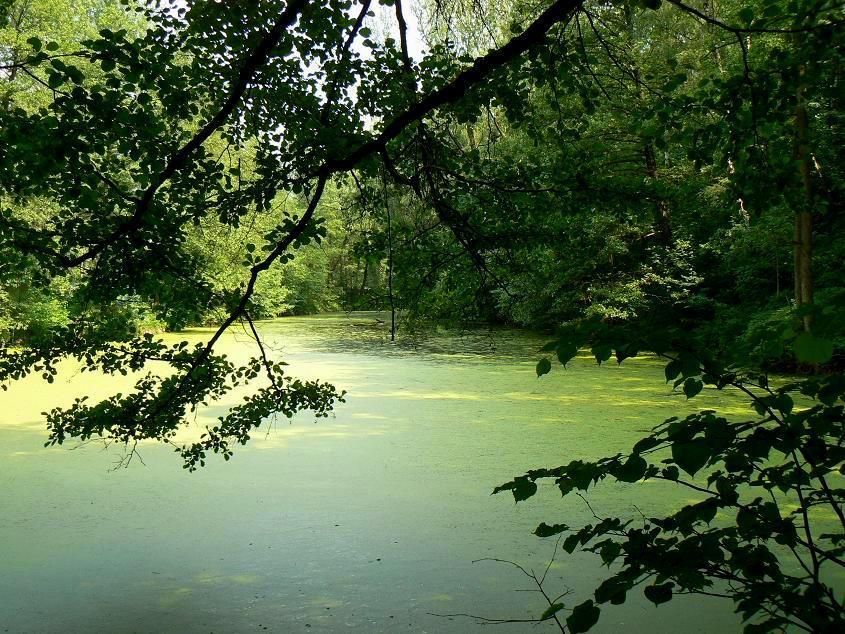 zanesený rybník